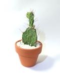 mugcupflowervase012