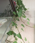 mugcupflowervase016