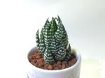 mugcupsucculent008