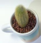sublimationmugcupflower004