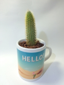 sublimationmugcupsucculent004